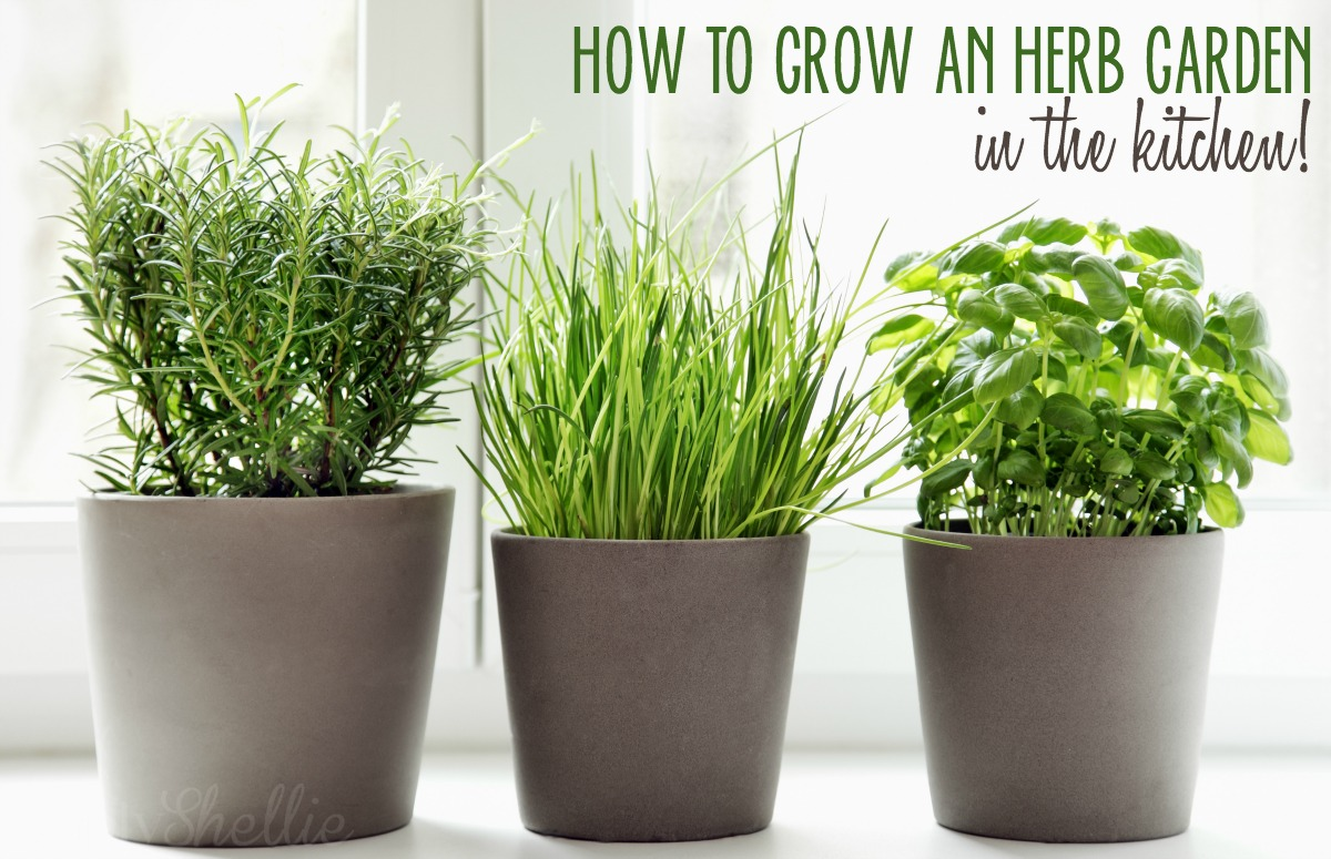 5 Ways To Grow An Herb Garden In The