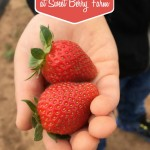 Bucket List! If you live in Texas, a Springtime trip to pick strawberries at Sweet Berry Farm is not to be missed. We make it an annual tradition!