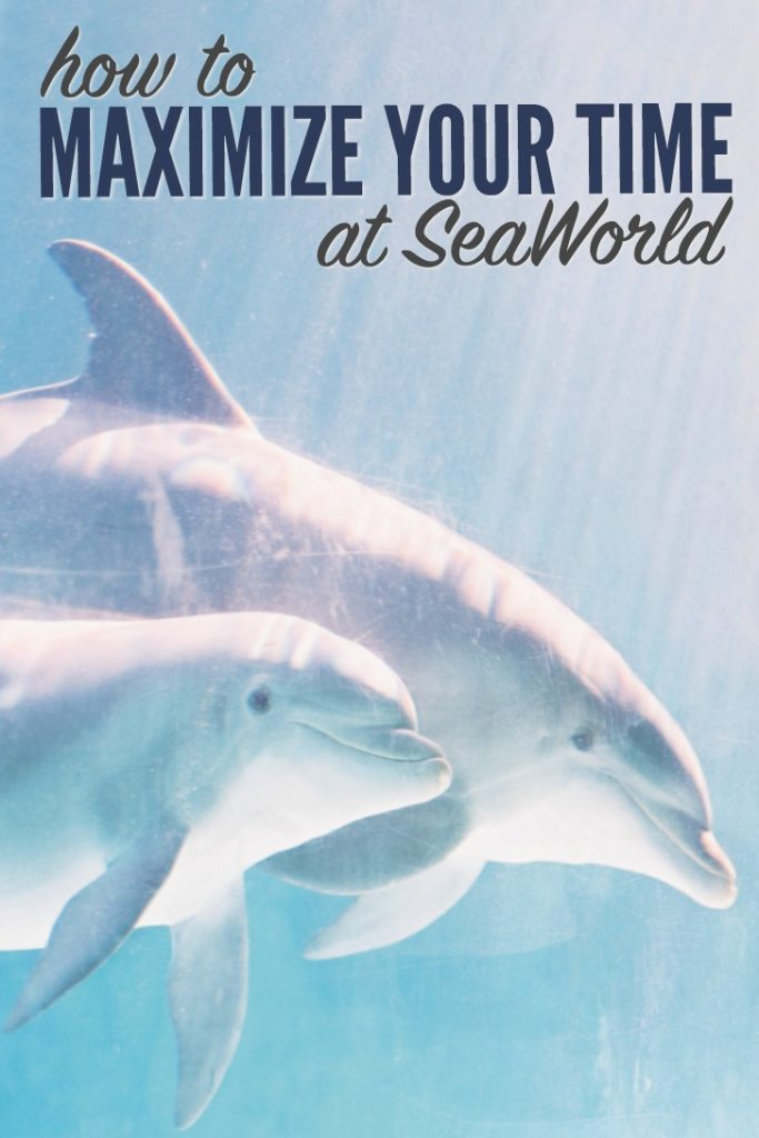 Maximize your time at Seaworld