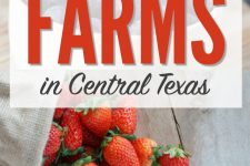 The Complete Guide to Pick Your Own Farms in Central Texas