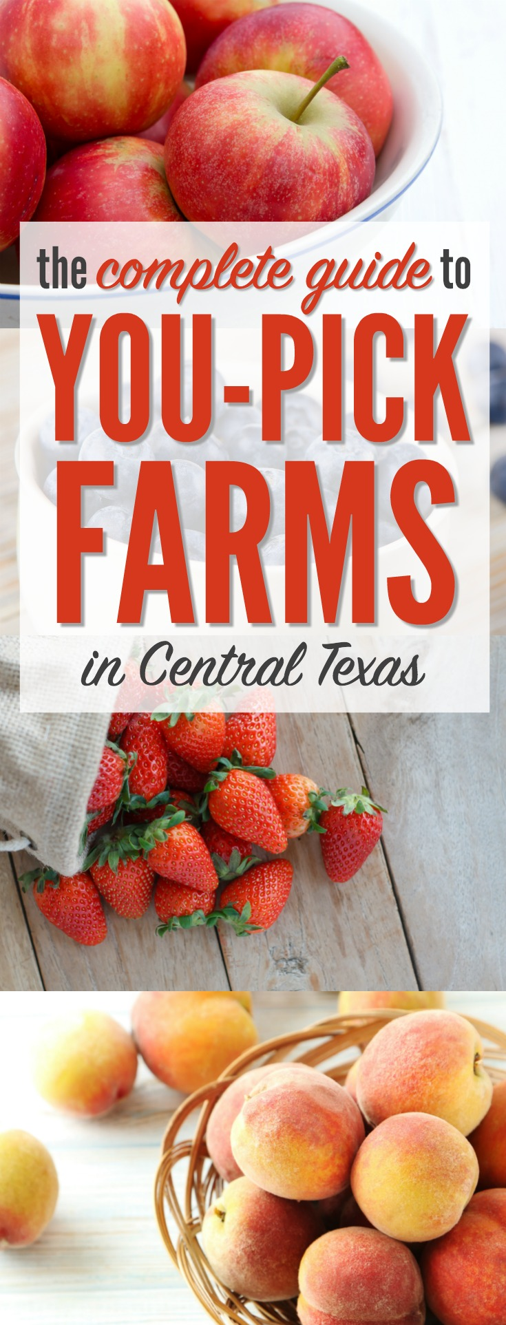 Best strawberries to grow in texas - Best Strawberries To Grow In Texas 42