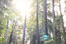 A Guide to Exploring the Muir Woods