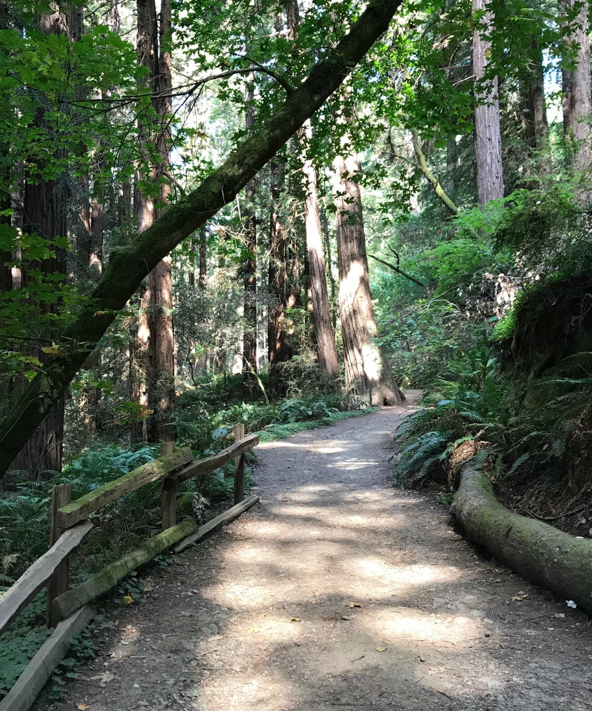 San Francisco's Urban National Parks - Muir Woods 1
